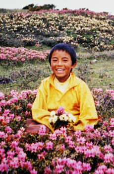 5-young-mingyur-rinpoche