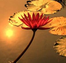 2-flower-msp-under-40