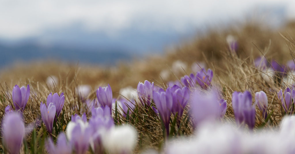 flowers-spring-fb-1200×628